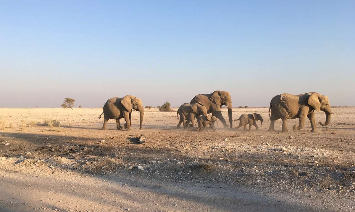 Elephants near Olifantsrus Campsite, a Former Culling Site